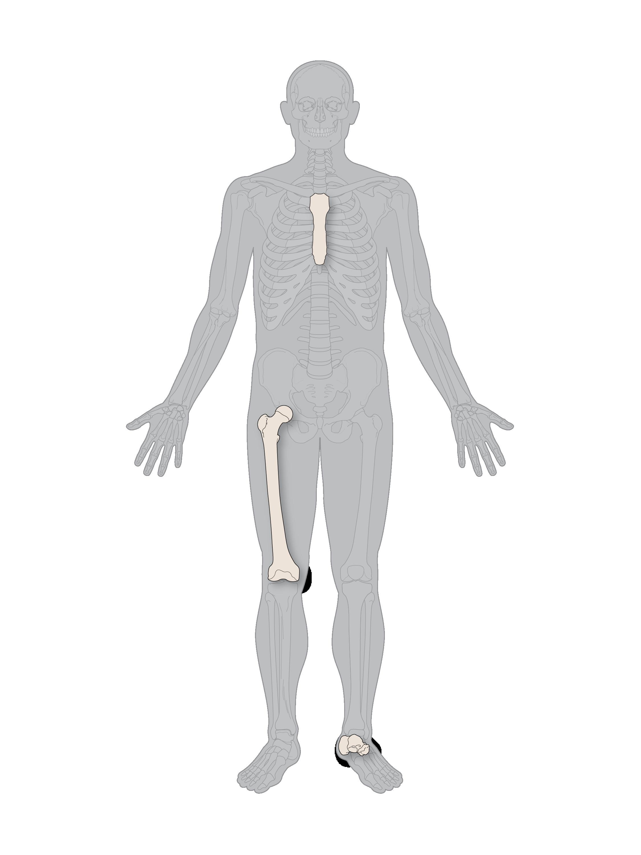 skeleton with 3 bones-01