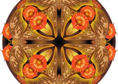 Tim Phelps Mandala Moths