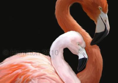 Will Hamilton Flamingos